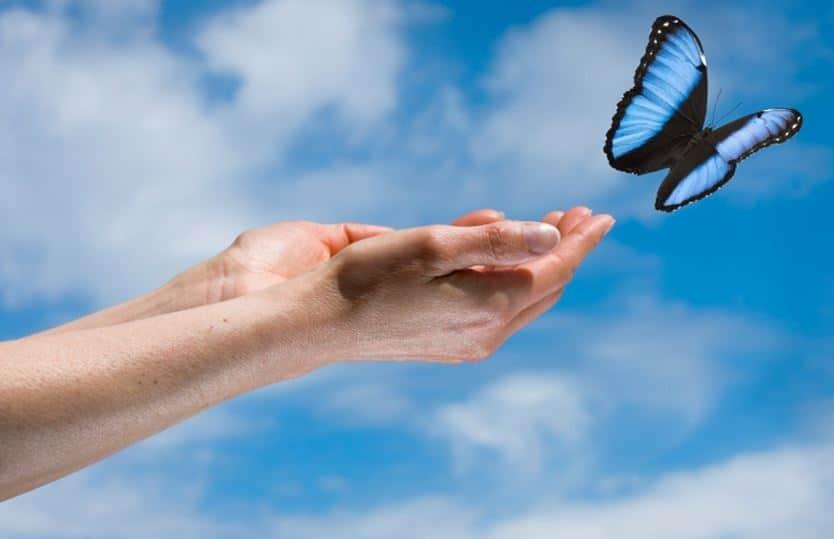 hands_butterfly